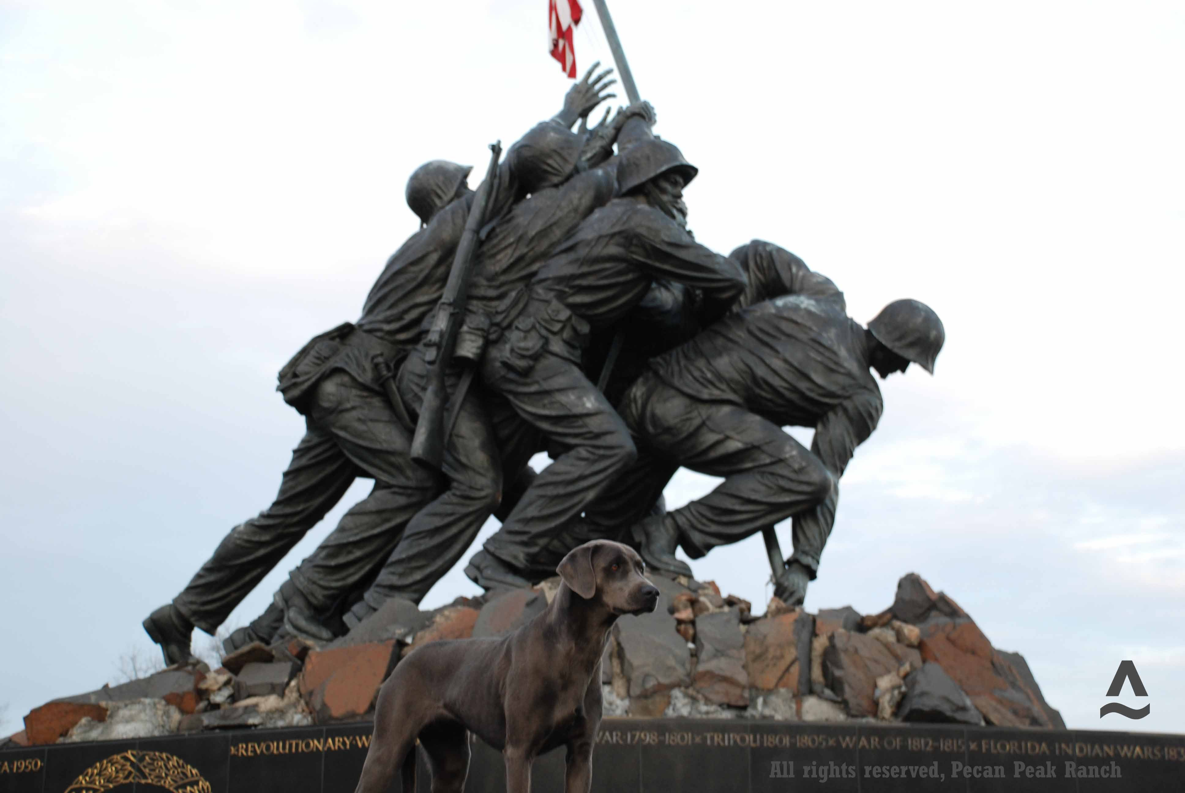 PPR's Jessie at the Statue of Iwo Jima in Washington DC